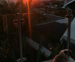 cat, beautifull, and morning image