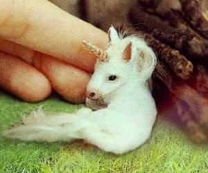 unicorn and baby image