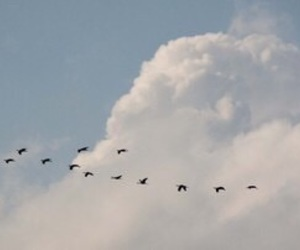 bird, sky, and indie image