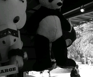 bear, black and white, and toys image
