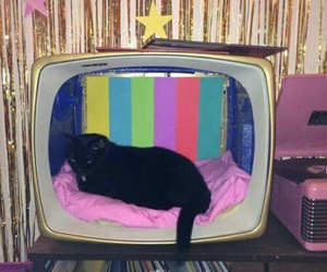 cat, tv, and black image