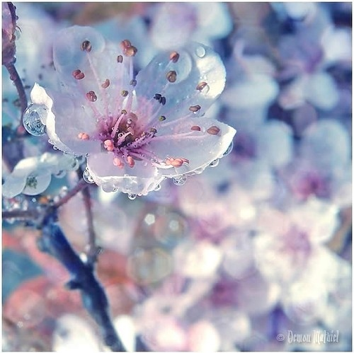 Blue pink flowerb shared by makeupsets on we heart it mightylinksfo