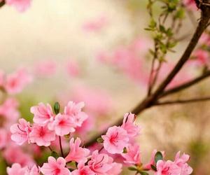 beautiful, natureza, and flores image