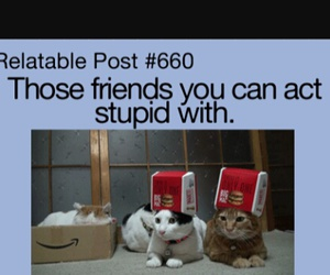 friends, cat, and stupid image