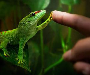 lizard, animal, and green image