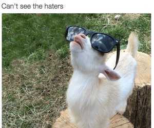 funny, goat, and goats image