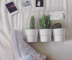 cactus, plants, and grunge image