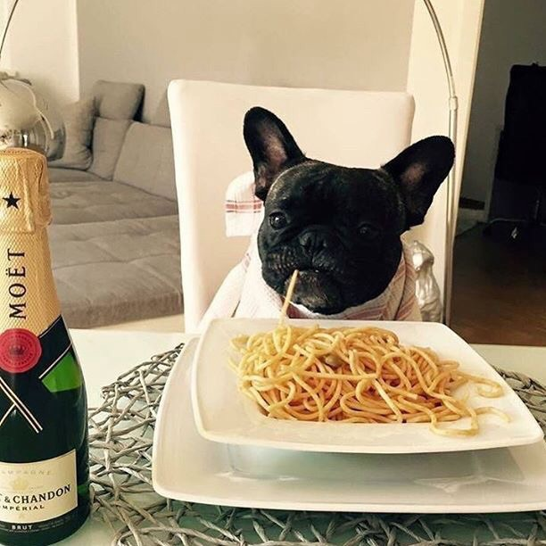 dog, champagne, and moet image