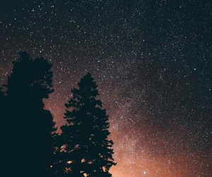 forest, paisajes, and night image