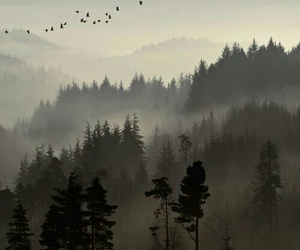 forest, nature, and bird image