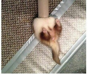 ferrets, fight, and life? image
