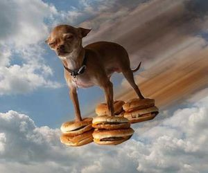 dog, burger, and funny image