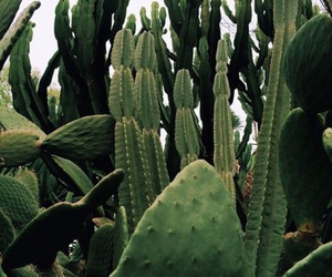 green, cactus, and plants image