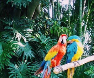 parrot, animals, and summer image