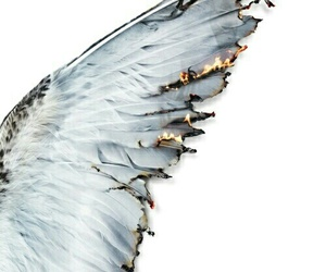 angel, wings, and fire image