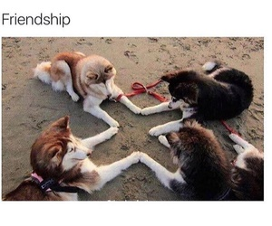 dog, friendship, and love image