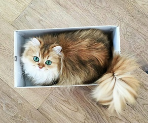 cat, animal, and box image