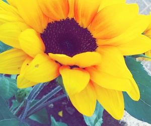 colour, flower, and yellow image