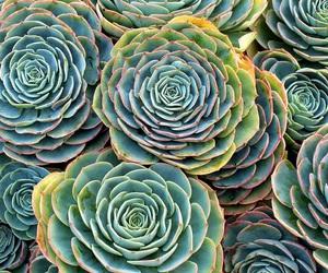 alternative, echeveria, and flowers image