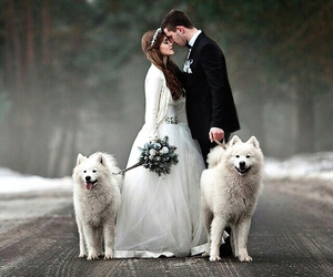 love, dog, and wedding image