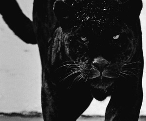 black, cat, and animal image