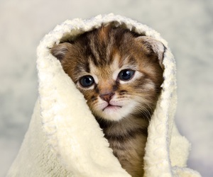 kitten, baby animals, and cats image