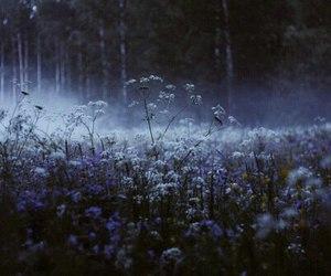 flowers, nature, and dark image