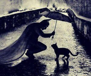 batman, cat, and black image