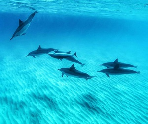 ocean, blue, and dolphins image