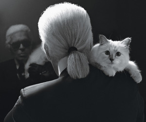 cat, fashion, and karl lagerfeld image