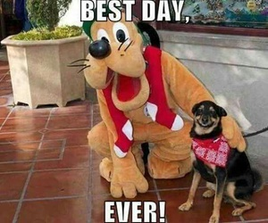dog, funny, and disney image