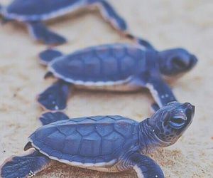 animals, turtle, and beach image