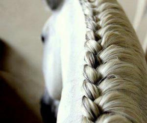horse, braid, and white image