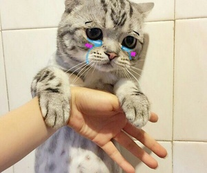cat, sad, and cry image