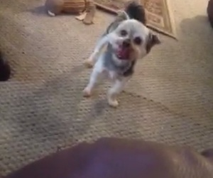 adorable, happy, and yorkie image