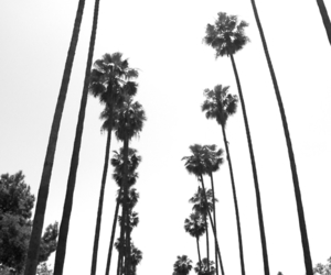 black and white, palms, and california image
