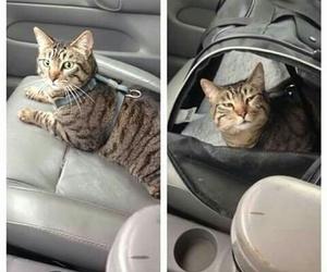 gato and veterinário image