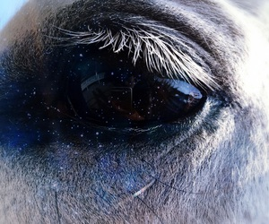 eye, horse, and milky way image