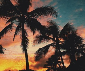 summer, palms, and nature image