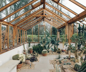 cactus, plants, and greenhouse image