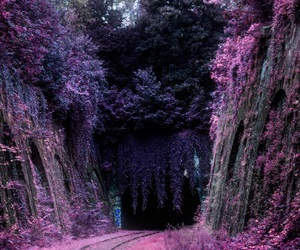 nature, purple, and forest image