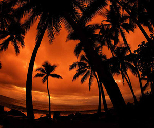 beach, photography, and palm trees image
