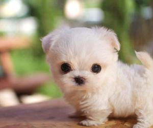 cute dog, white, and awwww image