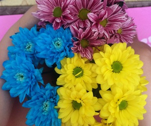 bright, colors, and flowers image