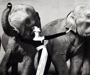 animals, elephants, and model image