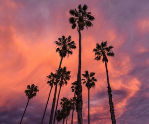 palms, sky, and nature image