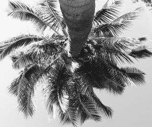 summer and palm image