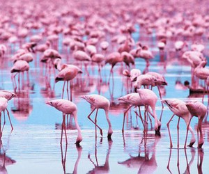 flamingo, pink, and blue image