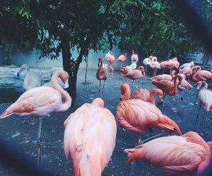 bird, flamingo, and pink image