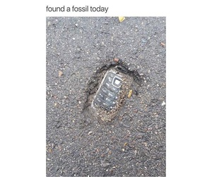 funny, fossil, and lol image